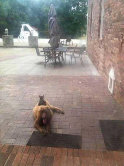 عکسهای بمب و خنده با موضوع حیوانات