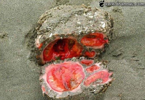 با عجیب و غریب ترین سنگ روی زمین آشنا شوید