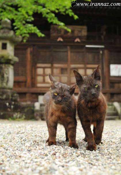 تفاوت بین گربه های ولگرد و نجیب زاده (عکس طنز)