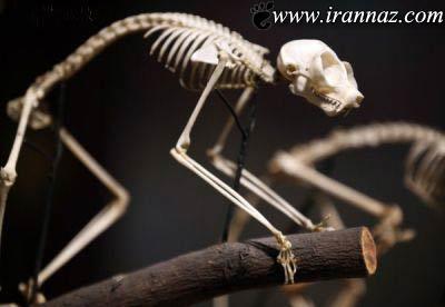 خارق العاده ترین موزه ی جانور شناسی در دنیا (تصاویر)