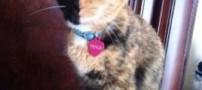 سوژه شدن چهره عجیب و غریب این گربه (عکس)