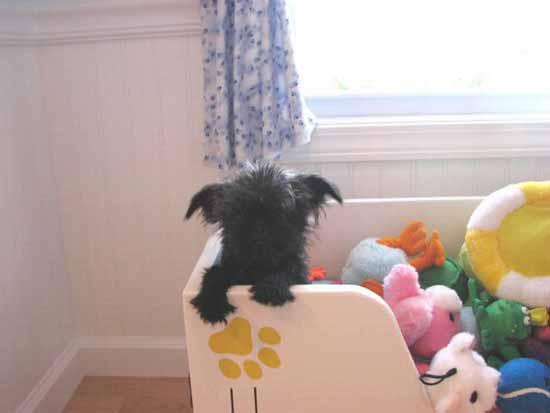 اقدام باور نکردنی پولدارها برای سگ هایشان!! (عکس)