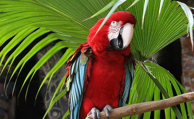 طوطی های فوق العاده در رنگ های خاص (عکس)