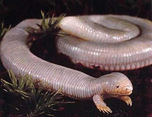 چندش آورترین و زشت ترین موجودات در جهان (عکس)
