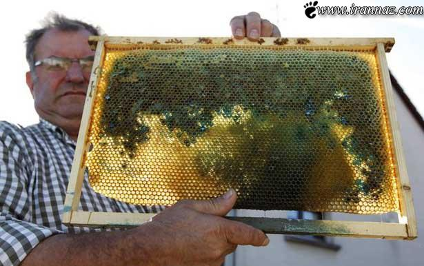 آیا تا بحال عسل سبز، قرمز و آبی دیده بودید؟ (تصاویر)