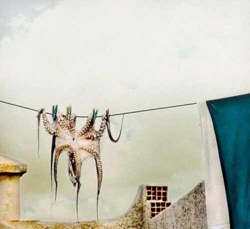 جالب ترین وقشنگ ترین عکس ها روز