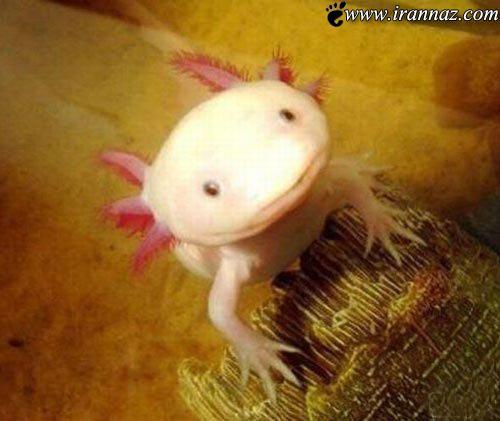 عکسهایی دیدنی از عجیب ترین ماهی دنیا که میخندد