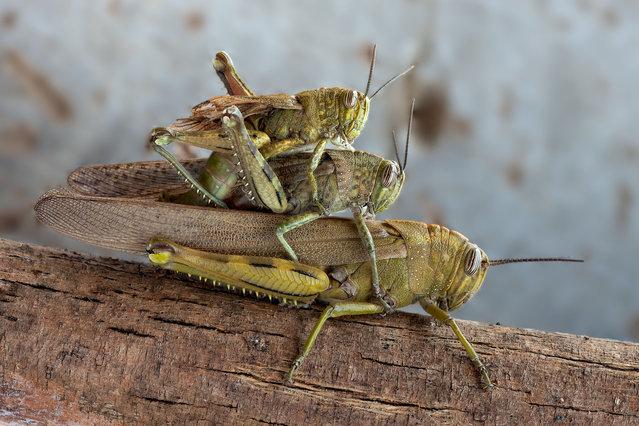 عکس های دیدنی و جالب از دنیای هراسناک حشرات
