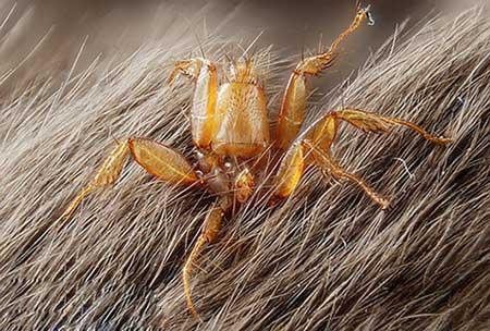 تصاویری از پشه های کمتر دیده شده و عجیب