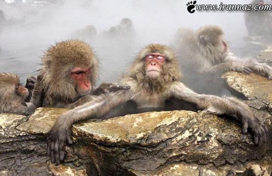 این هم عکسی خنده دار از سونای این حیوانات بامزه