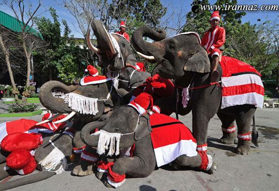 چند عکس خنده دار و بامزه از فیل های خوش لباس