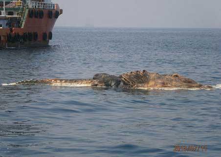 پیدا شدن جسد  موجودات غول پیکر و عجیب در دریای خلیج فارس (عکس)