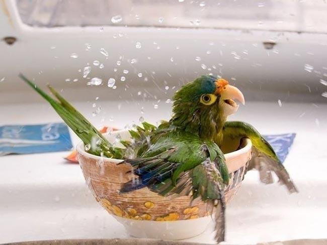 عکسهای خنده دار از رفتارهای جالب حیوانات و پرندگان