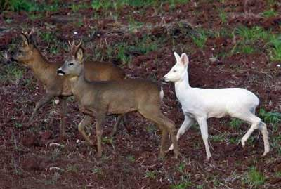 حیوانات حیرت انگیز با پوستی سفید (عکس)