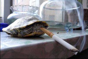 آدمها کم بودند,لاک پشت ها هم سیگاری شدن