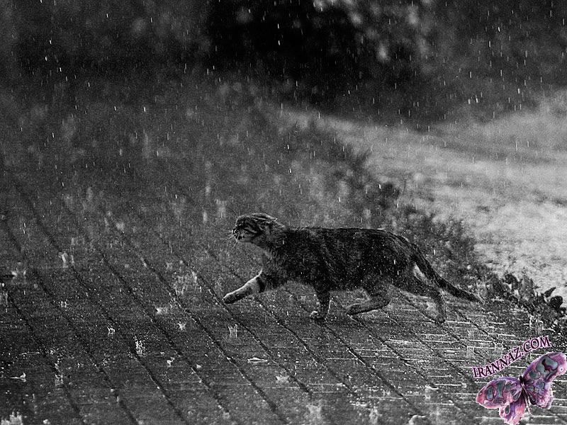 عکسهایی زیبا از باران
