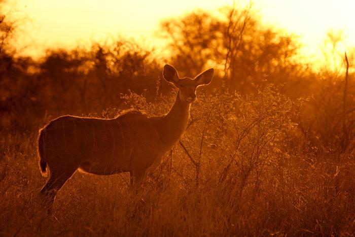 عکس های طلوع و غروب خورشید در قلمرو حیات وحش
