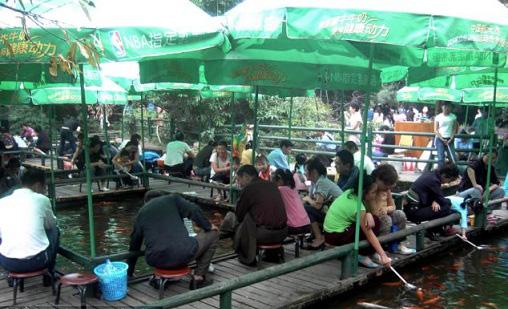 عکسهای بسیار جالب از شیر خوردن ماهی ها در تایلند