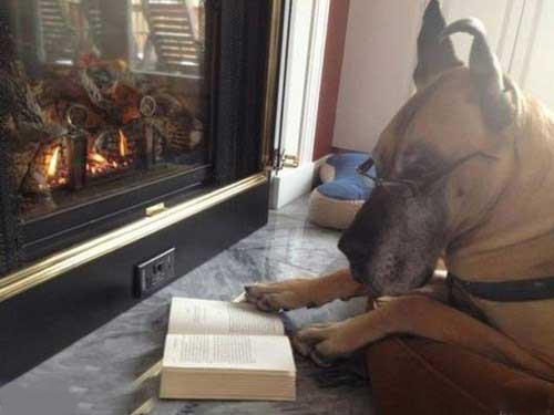 تا حالا سگ به این با کلاسی و متمدنی دیده بودید؟
