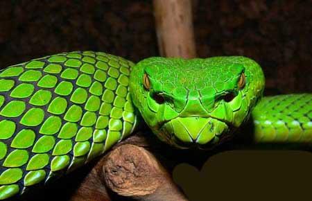 گونه های بسیار ترستاک و زشت از حیوانات کمیاب