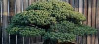 این درخت زیبا لقب جان سخت را از آن خود کرد (عکس)