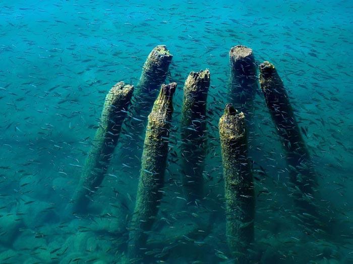 عکس های زیبا و بسیار دیدنی از عجایب اعماق دریاها