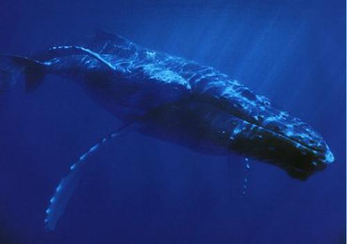 بزرگترین جانور روی کره زمین کدام است؟ (عکس)