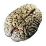 اعجاب انگیز درباره مغز انسان