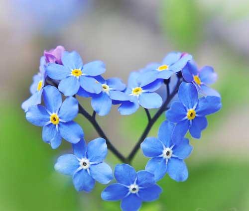 عکس های عاشقانه و دوست داشتنی با زمینه قلب