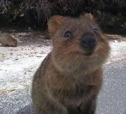 بامزه ترین و خوشگل ترین حیوان پستاندار دنیا (تصاویر)