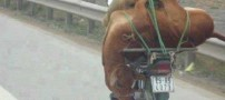 نگاه کنید این حیوان زبان بسته رو چیکارش کردن!!