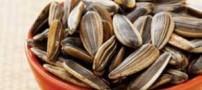 تخمه آفتابگردان سرشار از مواد تغذیهای با ارزش