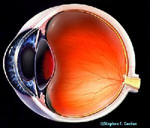 استفاده از رفلکسهای چشم در تعیین هویت