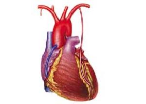 بالون یا جراحی قلب؛ كدامیك بهتر است؟