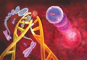 کشف ژنی كه از چاقی پیشگیری میكند