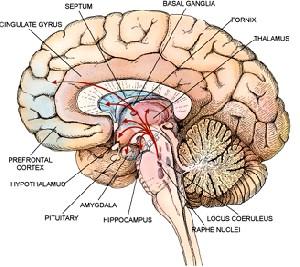 کشف پروتیینی با قابلیت افزایش فوقالعاده حافظه