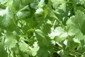 نوعی سبزی آرامش بخش و ضد تشنگی