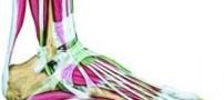 ارتباط رنگ لباس با پوکی استخوان در بانوان