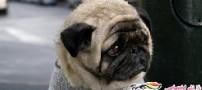 غمگینترین سگ جهان!