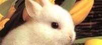خرگوشهای سوئدی به سوخت تبدیل می شوند