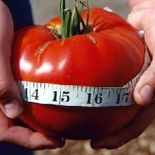 اثرات گوجه فرنگی در پیشگیری از چاقی