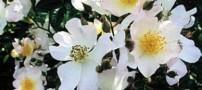گلی که باعث کاهش استرس میشود