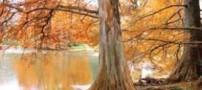 فصل پاییز و افسردگی روحی انسان