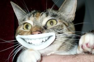 گربه ای که بزغاله شد