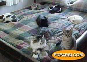 پیدا شدن 117 گربه در خانه زن آمریكایی