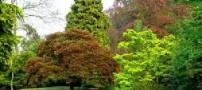جهت یابی از روی درختان و گیاهان