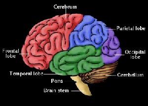 شباهتهای مغز انسان و کامپیوتر