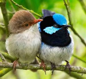 پرنده ماه تولد شما کدام است؟