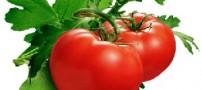 تأثیر گوجه فرنگی در پیشگیری از چاقی