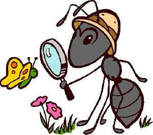 مورچه ها و موریانه ها هم کشاورزی می کنند!!